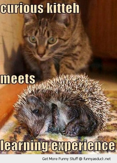 funny-learning-experience-cat-stalking-hedgehog-pics
